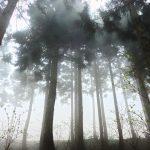 妊娠中の杉花粉 対処法は産婦人科医に相談!杉の画像