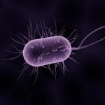 細菌対策がしっかりしているウォーターサーバー